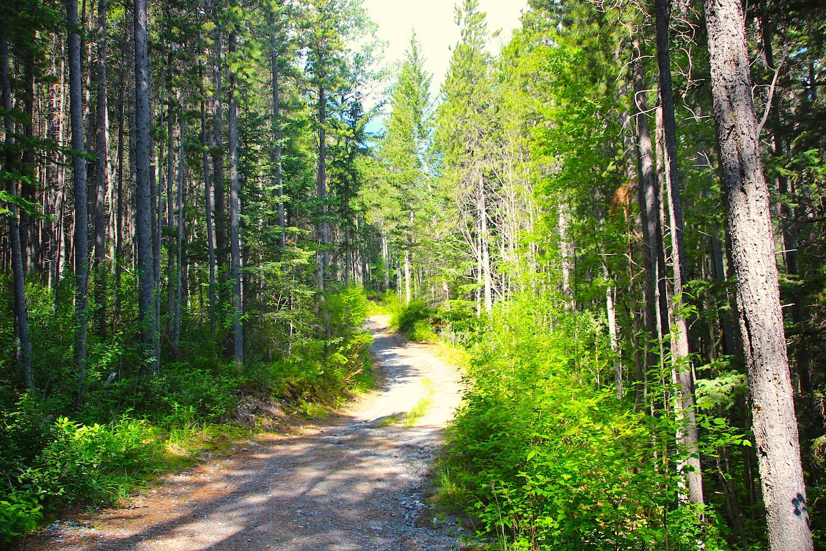 002 - Trail