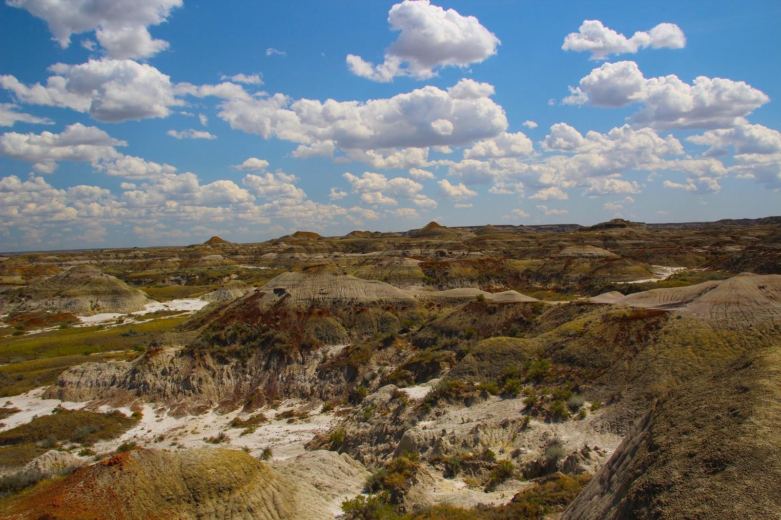 003 - Dinosaur PP Landscape