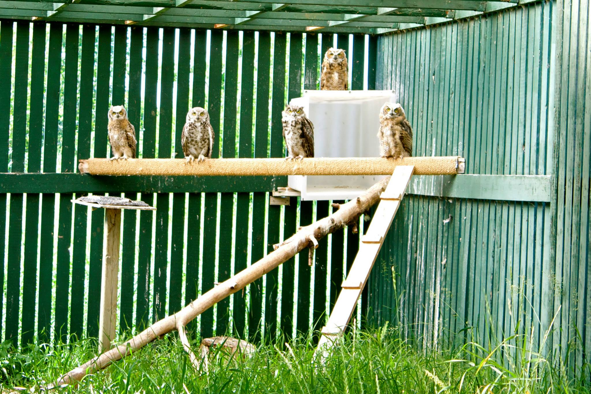 003 - Owls