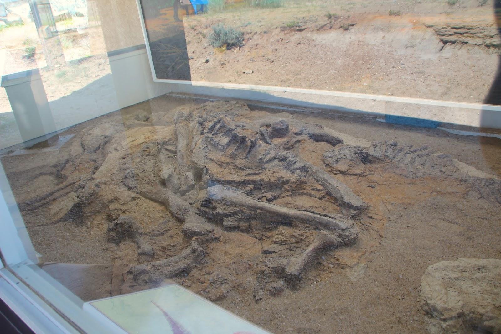 004 - Headless Hadrosaur