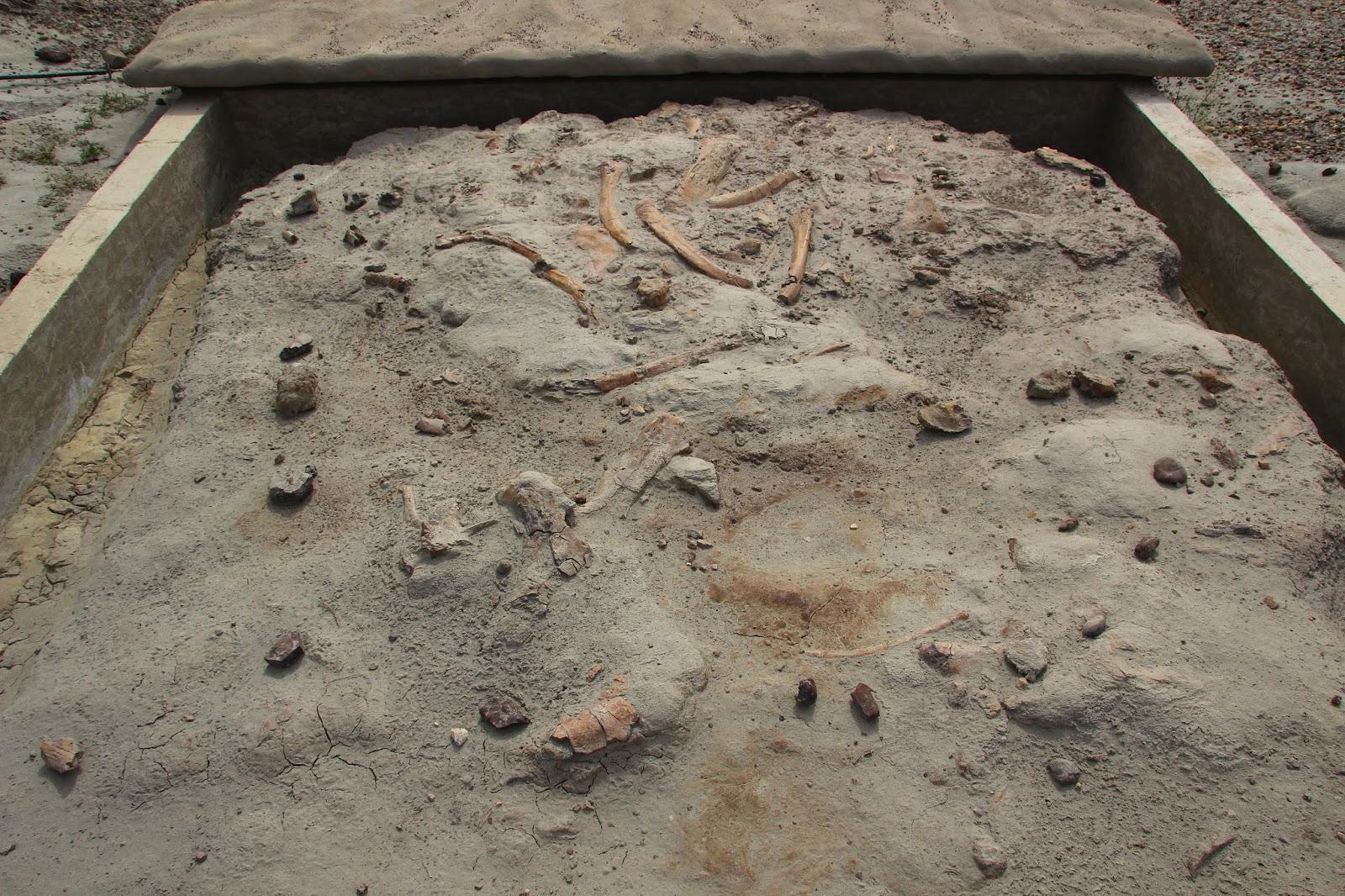 006 - Centrosaurus Quarry