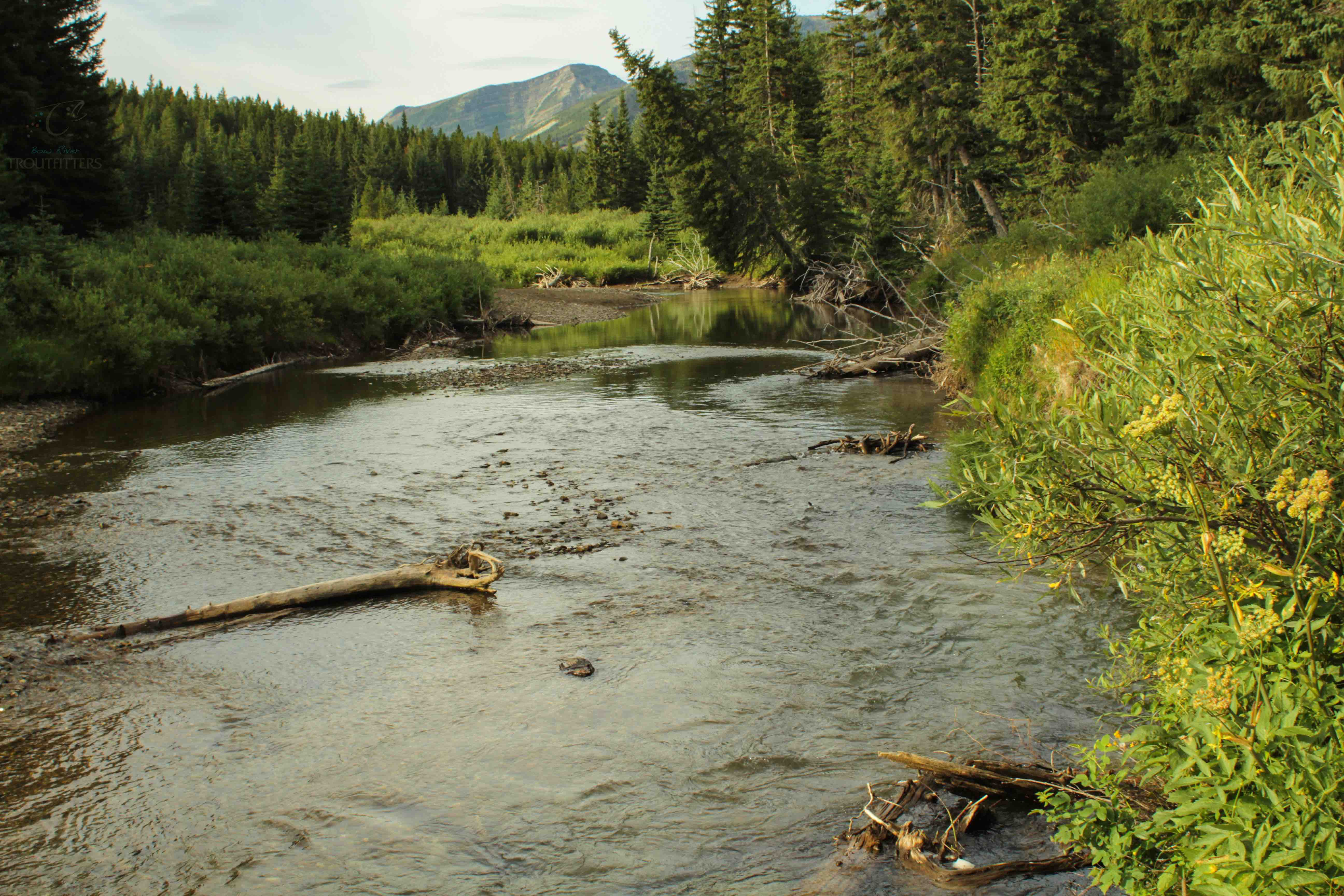 Bow River Troutfitters-6