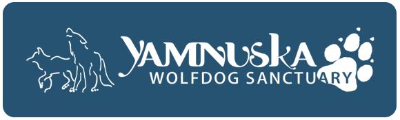 Yamnuska-Wolfdog-Sanctuary