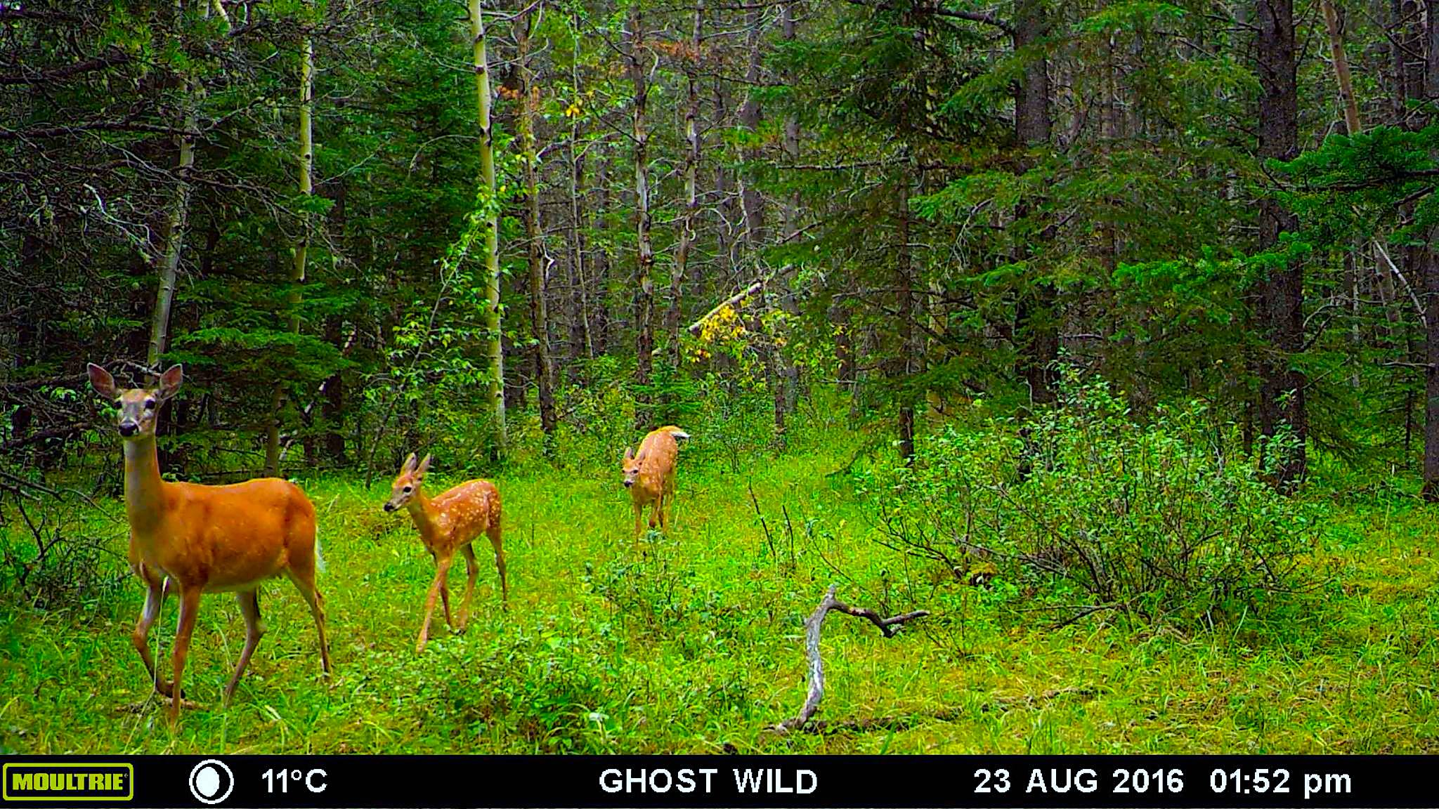 The Woes of Wildlife Cameras