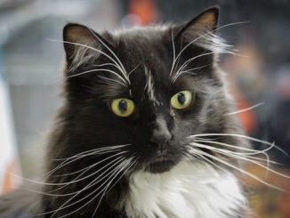 Tux the Cat - Calgary 2