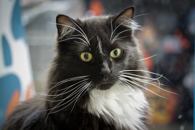 Tux the Cat - Calgary