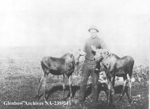 Wildlife alberta history photographs