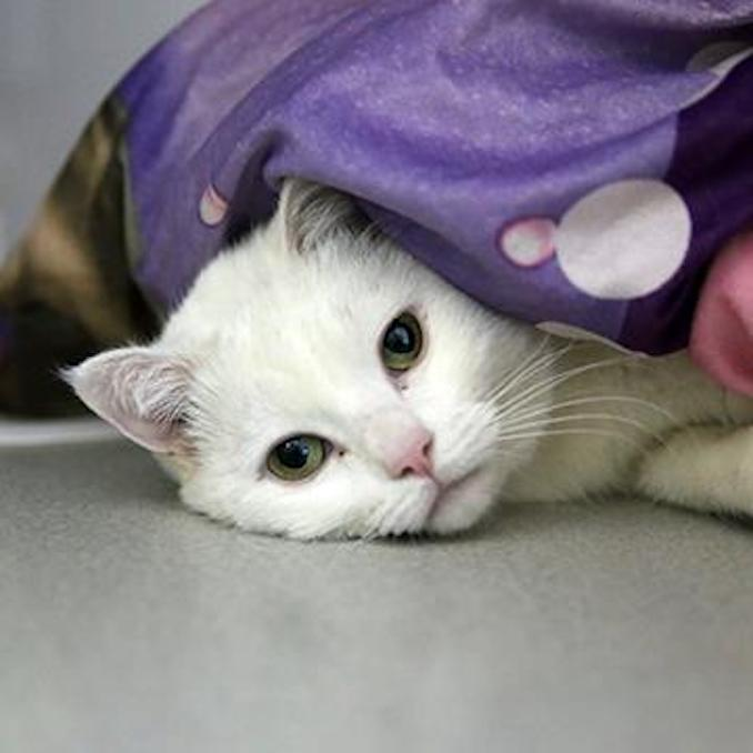 Bonnie cat calgary