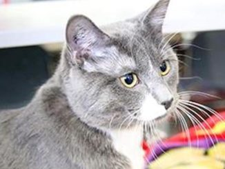 Charleston cat calgary