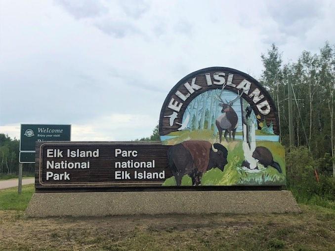 Bison of Elk Island