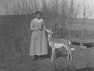 historic wildlife photos