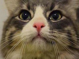 avery the cat calgary
