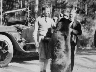 old photographs of bears