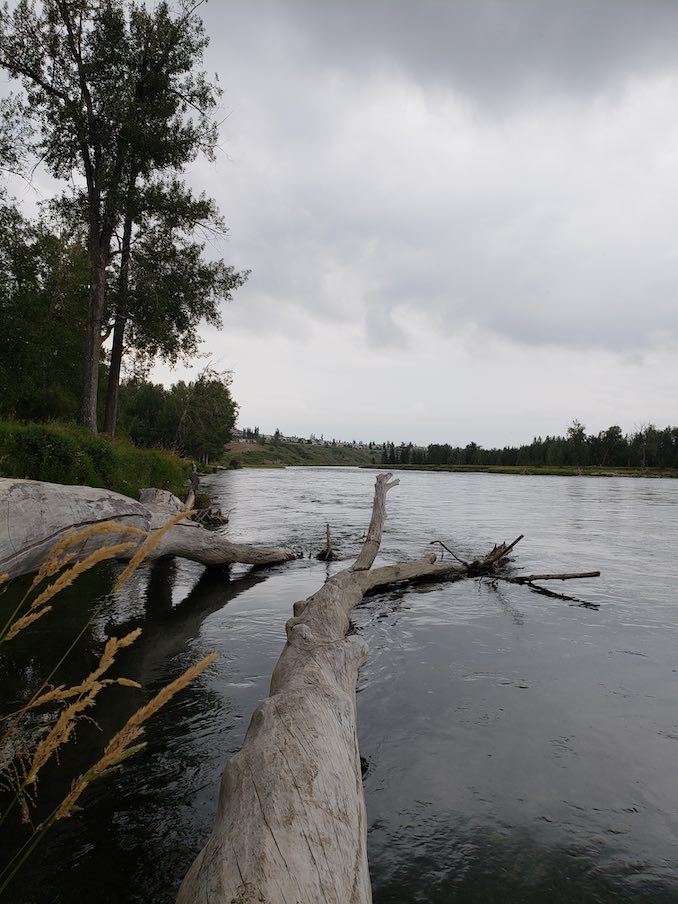 Courtney Dahoy - Photo of the Bow River, down in Douglasdale. Nature doses are excellent way to keep calm and carry on.