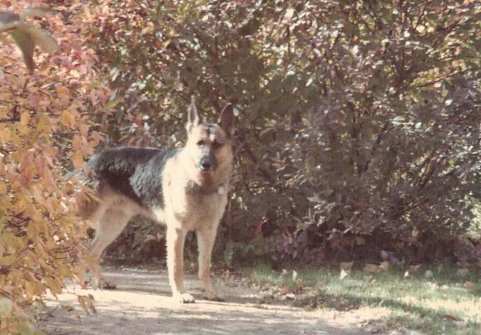 "Lobo – the ""real"" star of my novels at Bowness Park"