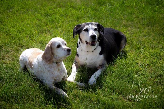 ARTS Senior Animal Rescue