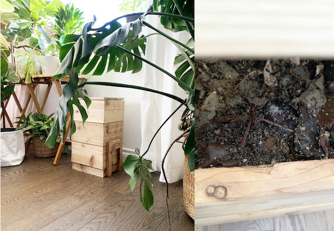 I started indoor vermiculture a couple of months ago. Every morning I want to check what my worms are doing. But I think it's better to leave them alone.