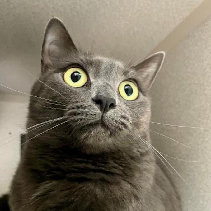 Bonnie the cat needs a loving home in the Calgary area