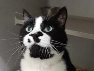 Carter the Cat needs a loving home in the Calgary area