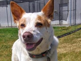 Darwin the Dog needs a loving home in the Calgary area