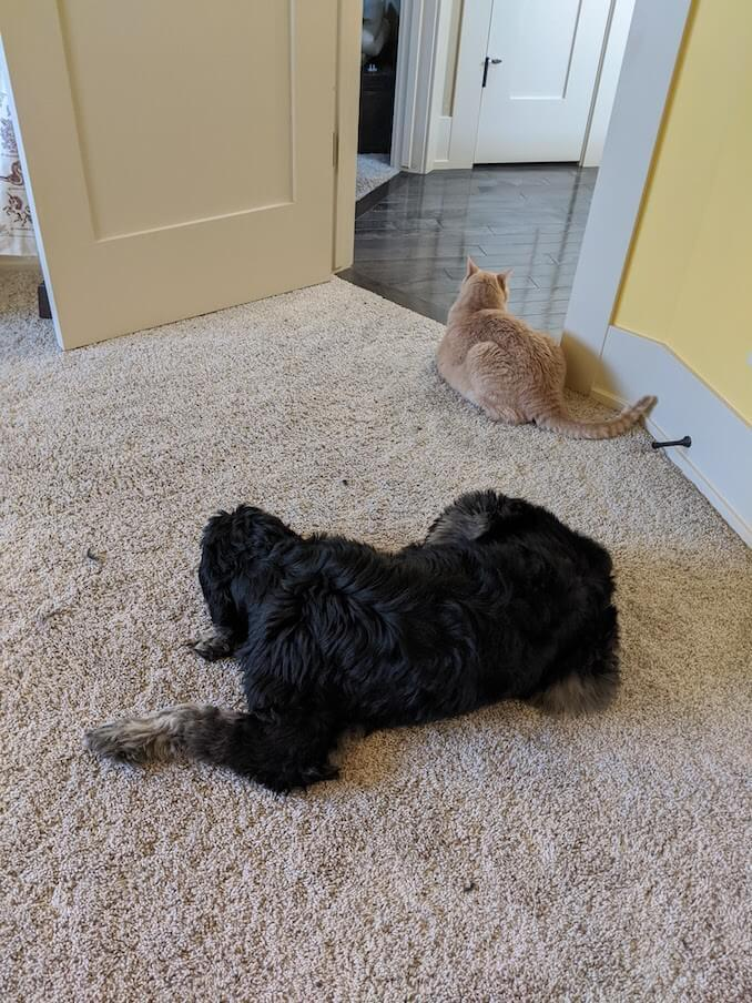 N.L. Blandford - Sebastian and Watson guard me most days while I investigate fraud for a financial institution.