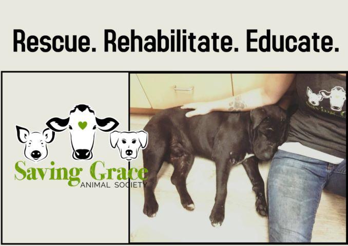 Saving Grace Animal Society
